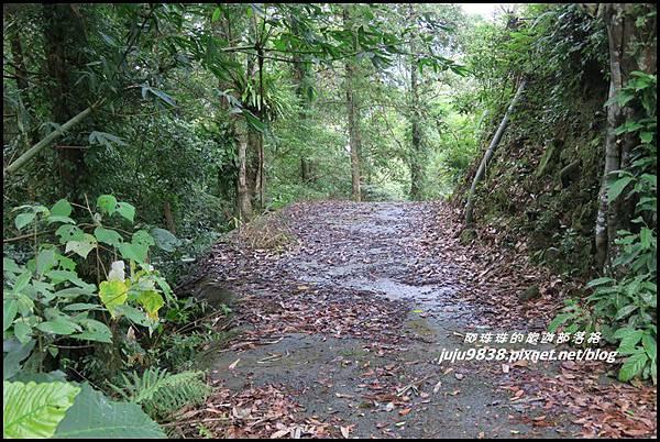 怪獸森林59.JPG