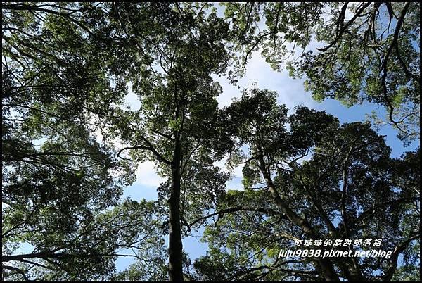 怪獸森林93.JPG
