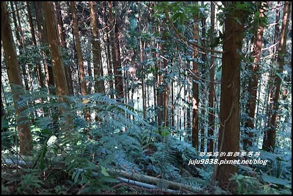 怪獸森林100.JPG