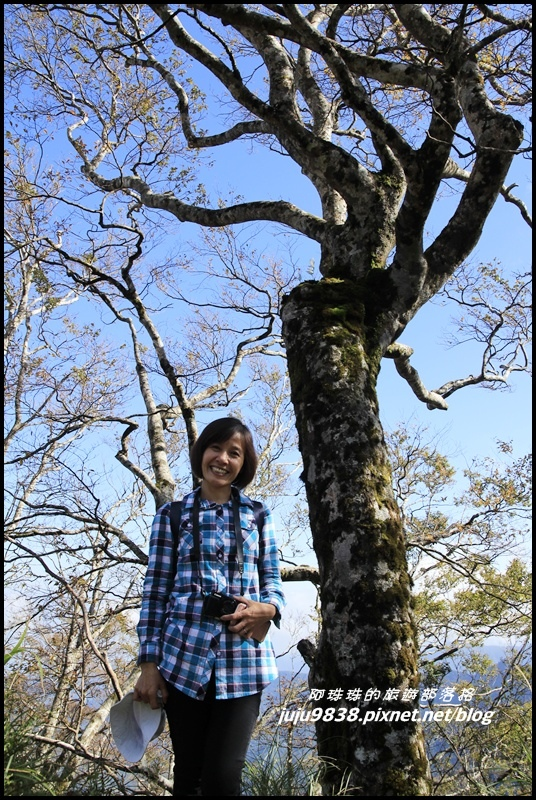山毛櫸步道19.JPG