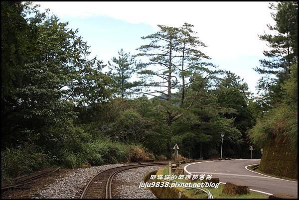 阿里山40.JPG