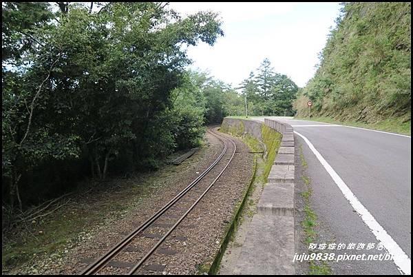 阿里山82.JPG