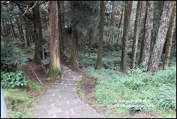 阿里山87.JPG