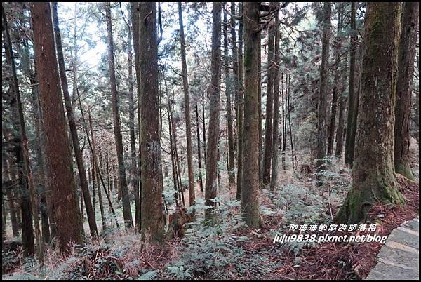 阿里山88.JPG