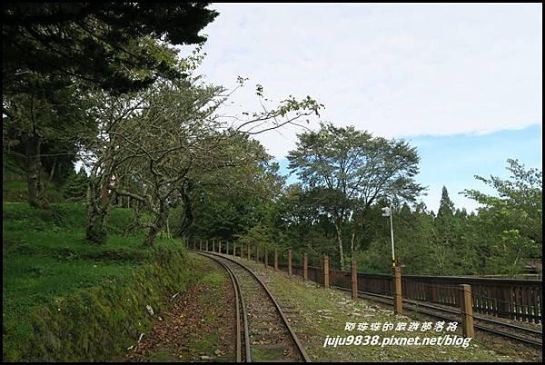 阿里山102.JPG