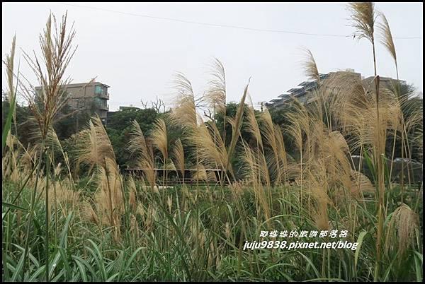 八德落羽松35.JPG