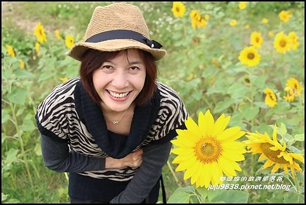 向日葵15.JPG
