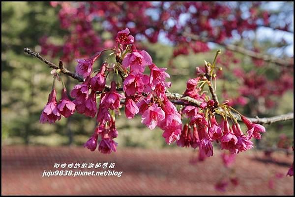 武陵農場43.JPG