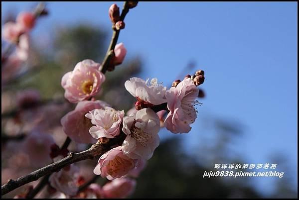 武陵農場46.JPG