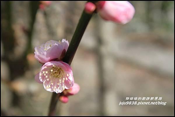 武陵農場89.JPG
