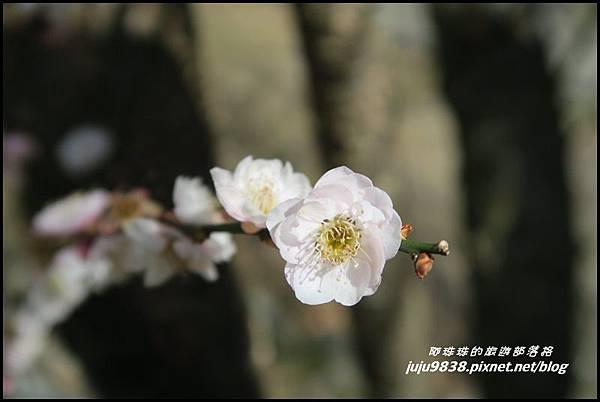 武陵農場91.JPG