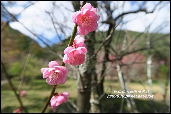 武陵農場93.JPG