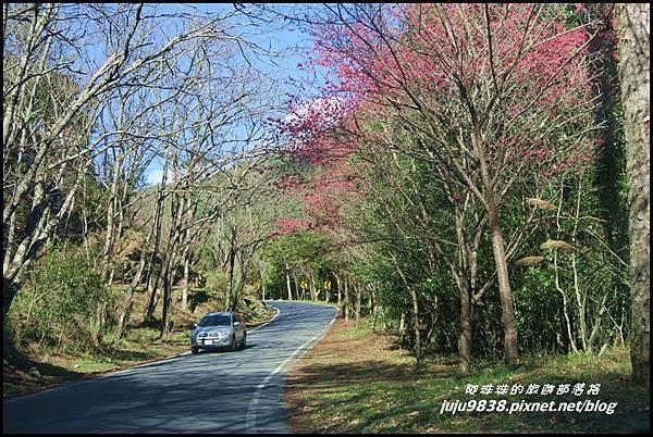 武陵農場137.JPG