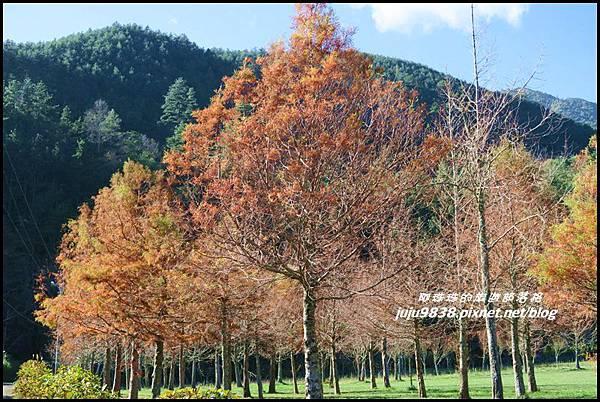 武陵農場155.JPG