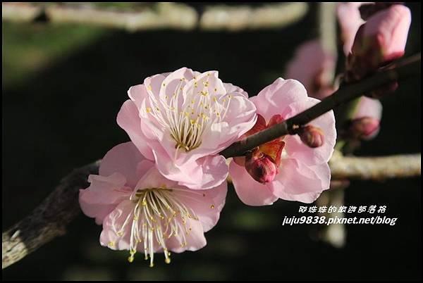 武陵農場180.JPG