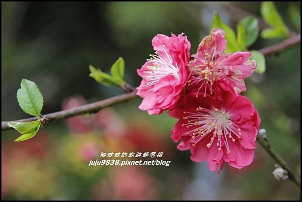 碧絡角20.JPG