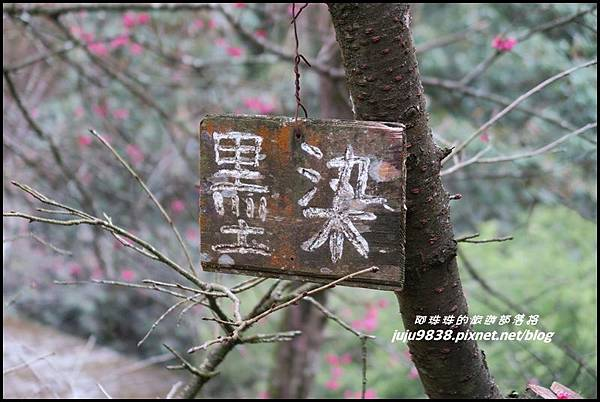 碧絡角70.JPG