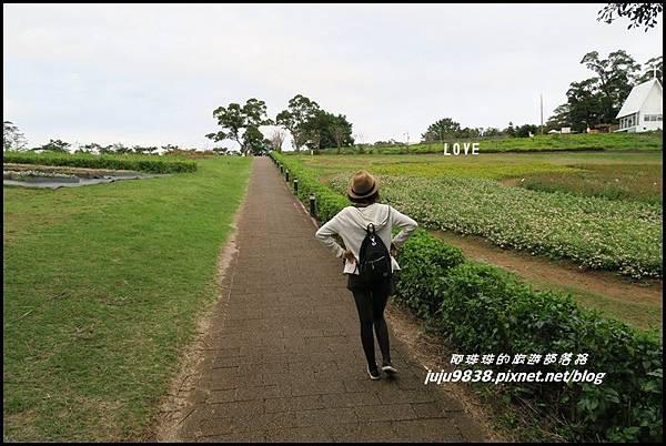 大溪花海47.JPG