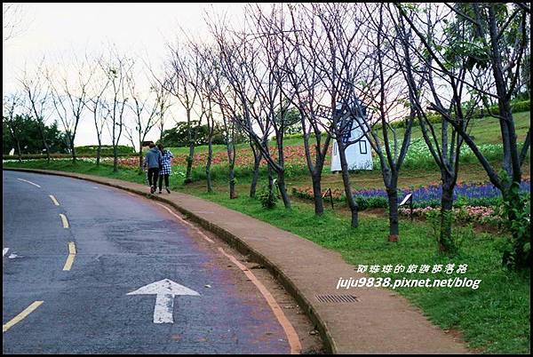 大溪花海55.JPG