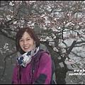 阿里山4.JPG