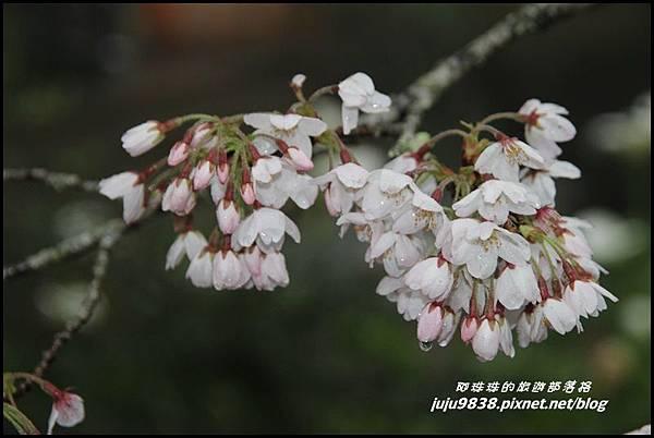 阿里山6.JPG