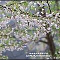 阿里山22.JPG