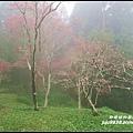 阿里山45.JPG