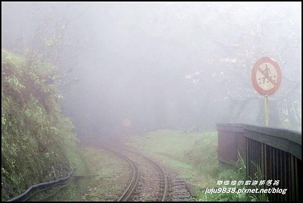 阿里山54.JPG