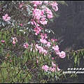 阿里山74.JPG