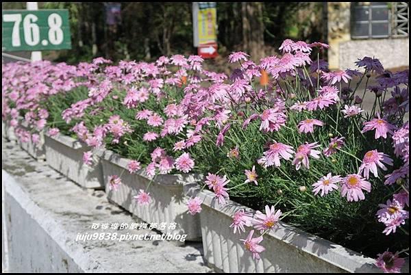 瑞里紫藤花季15.JPG