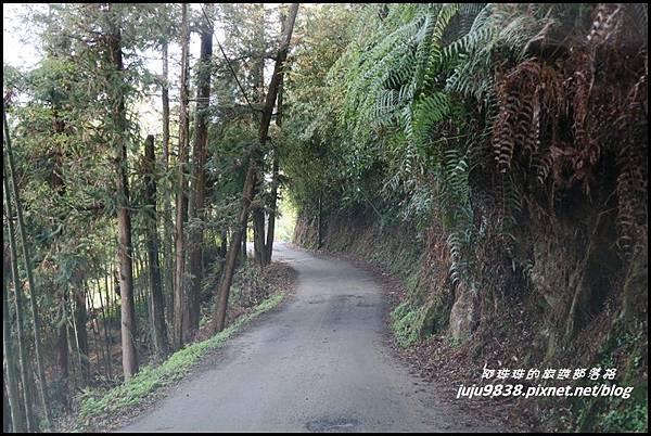 瑞里綠色隧道3.JPG