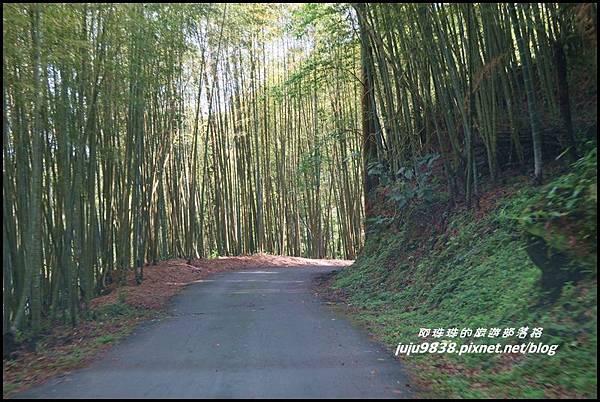 瑞里綠色隧道4.JPG