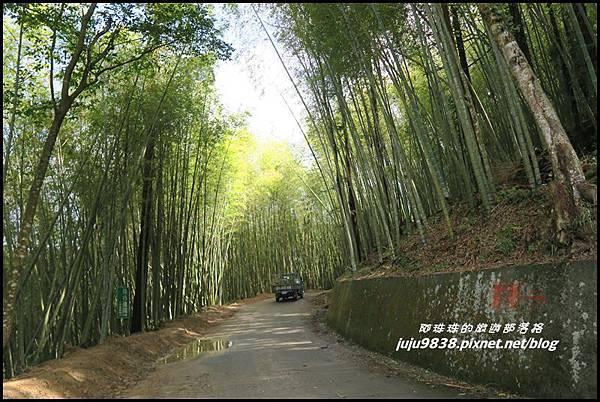 瑞里綠色隧道6.JPG