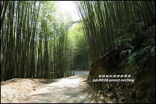 瑞里綠色隧道11.JPG