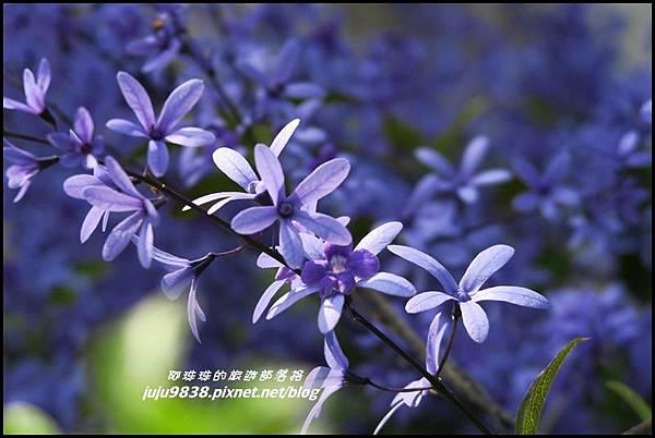 166縣道黃花風鈴木28.JPG