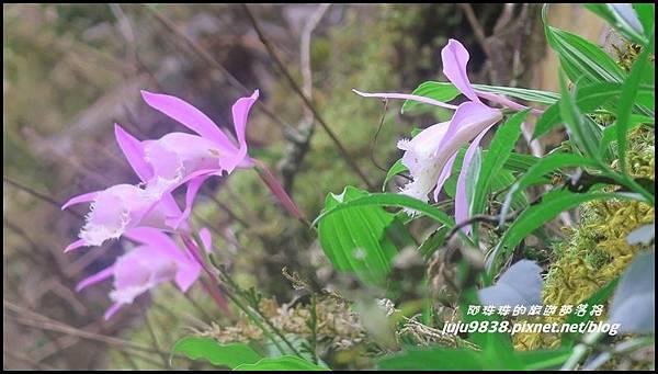 加里山1.JPG
