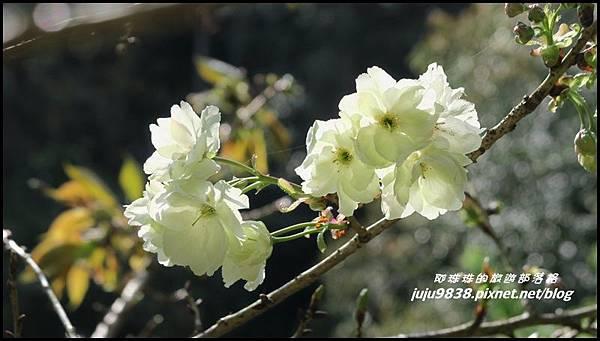 加里山8.JPG