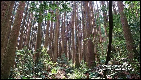 加里山35.JPG