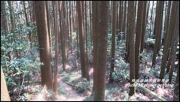 加里山47.JPG