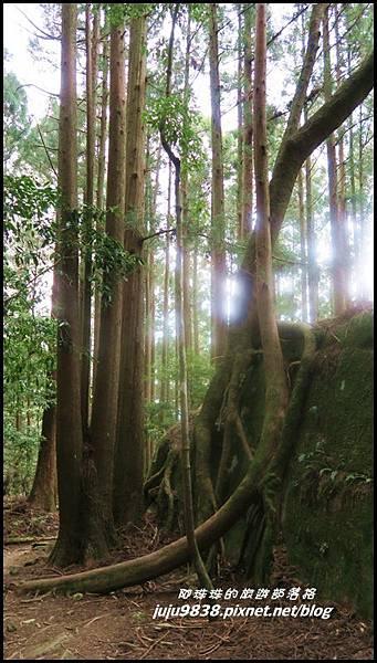 加里山51.JPG