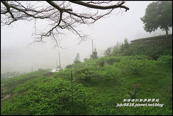 瑞里漫步雲端29.JPG