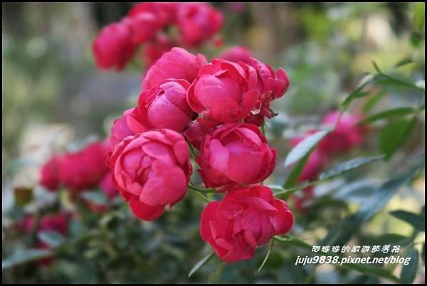 羅沙玫瑰莊園20.JPG