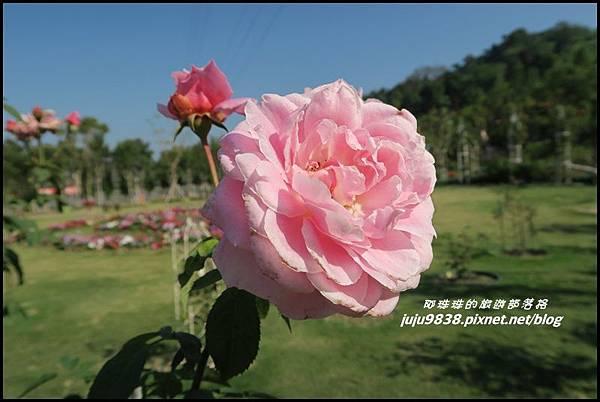羅沙玫瑰莊園22.JPG