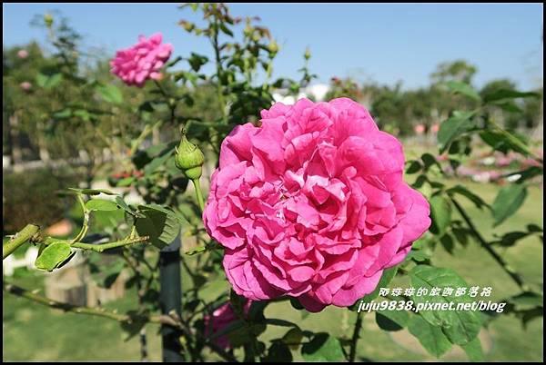羅沙玫瑰莊園23.JPG