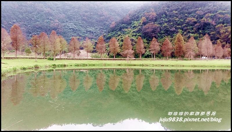 福園落羽松8.jpg