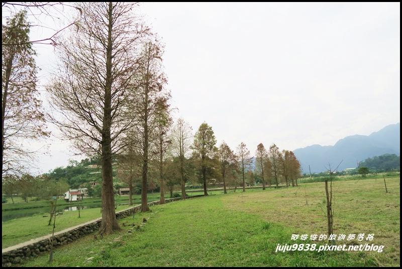 福園落羽松13.JPG