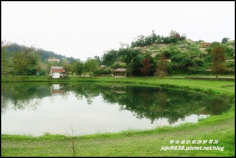 福園落羽松18.JPG