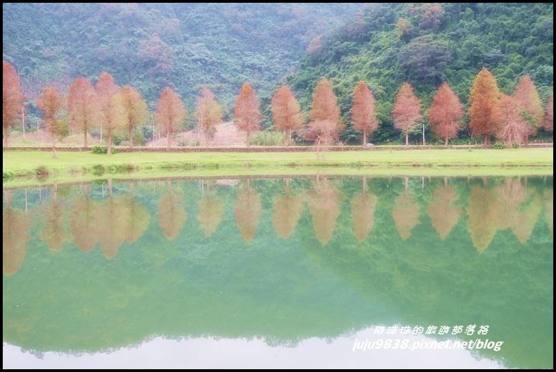福園落羽松19.JPG
