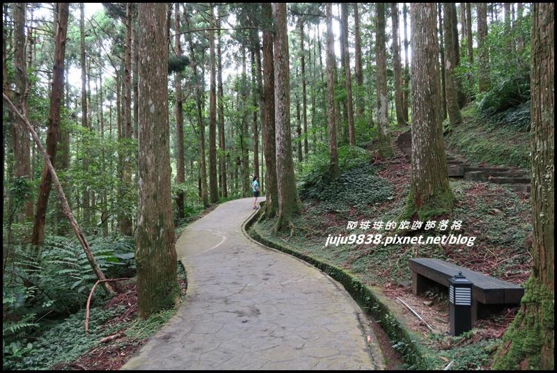 東眼山6.JPG