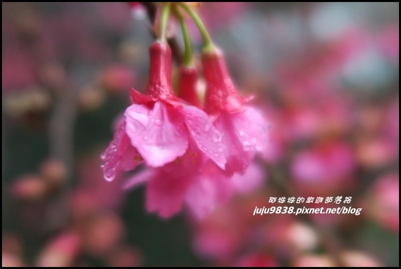 協雲宮30.JPG